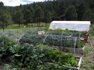 Organic Garden at Collins Lake Ranch